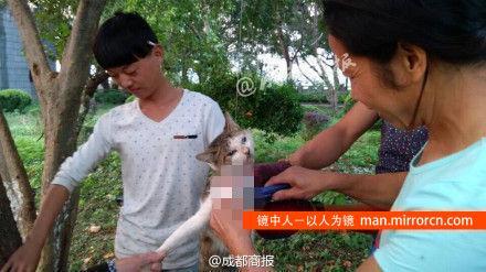 数名男女浙江景区虐猫 用美工刀活剥猫皮(图)