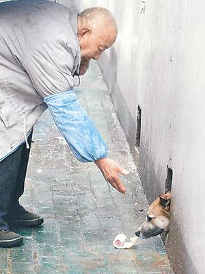 流浪狗受惊匿洞中好心市民喂养三年
