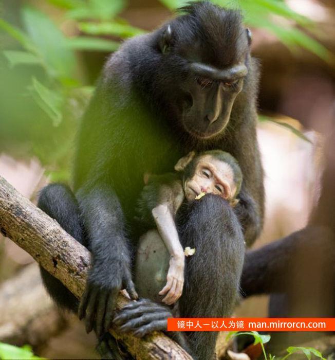 猕猴妈妈和她死去的孩子