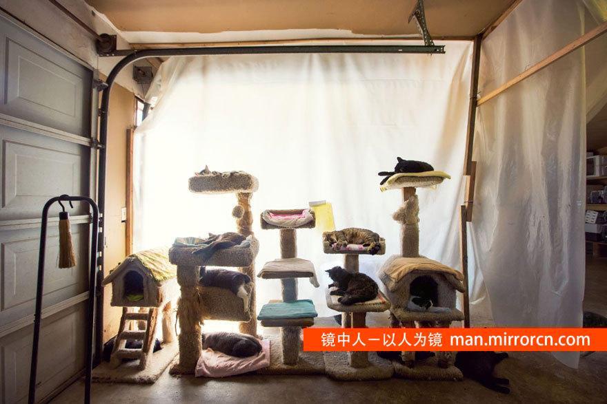 世界最大的猫咪收容所