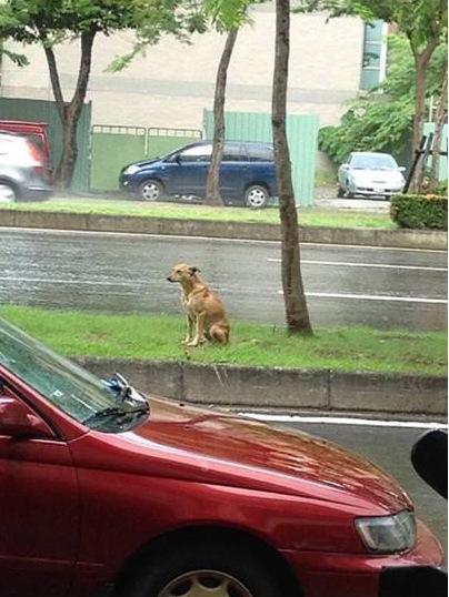 小狗被遗弃2年仍在原地等主人
