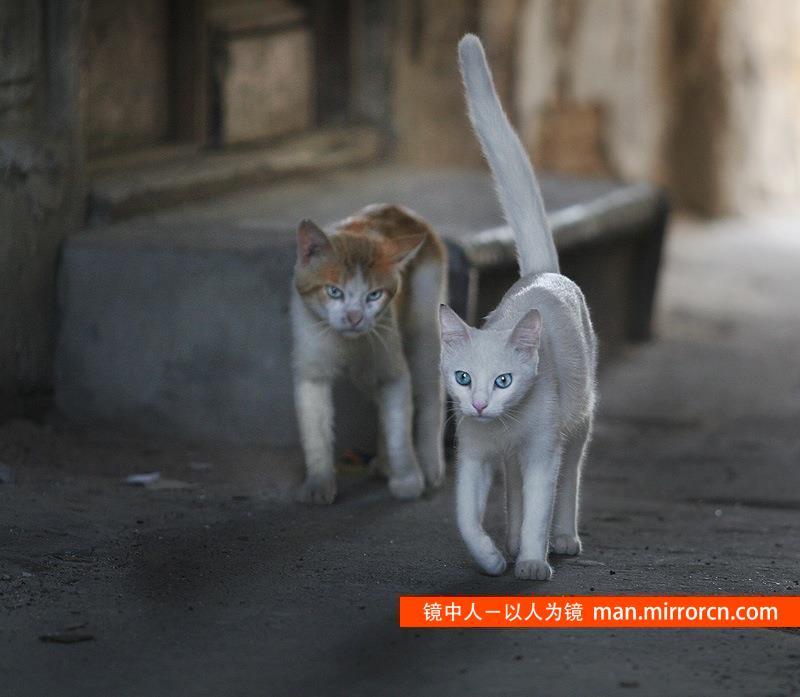 像猫一样 优雅做人