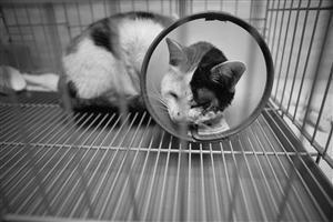 流浪猫被戳瞎眼睛胶水封口