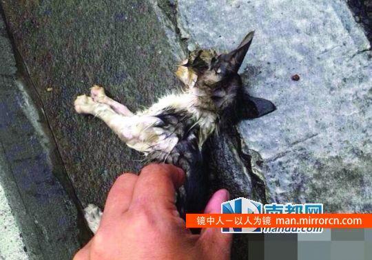 怒猫者高架桥扔下几十只猫