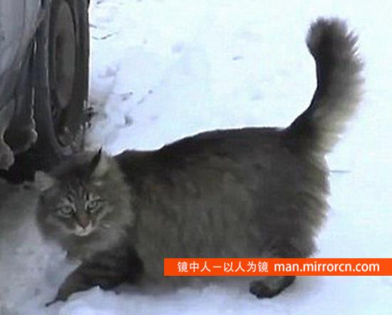 俄罗斯一流浪猫救活弃婴 为其取暖数小时(组图)